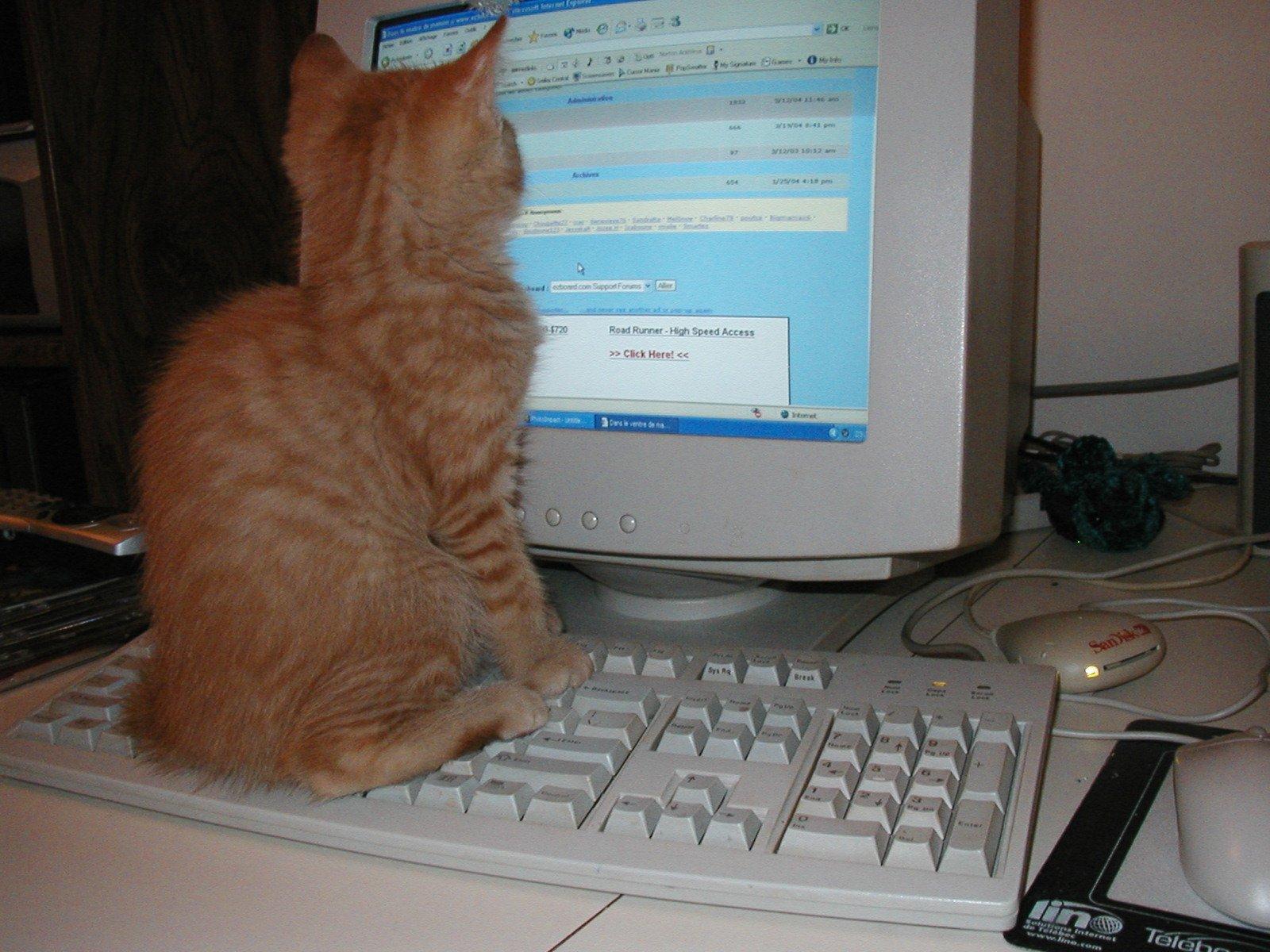 Cat at monitor