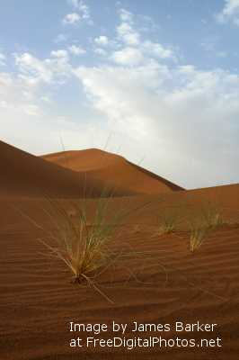 Sahara Desert (3)