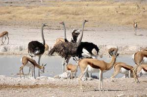 ostrich-and animals sm