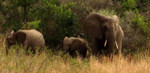 Elephant family sm