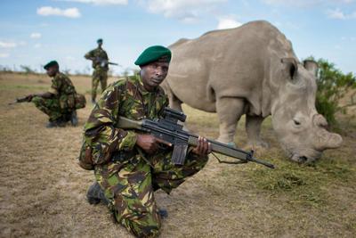 Rhino under guard sm2