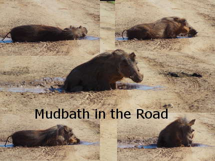 Warthog Mudbath collage